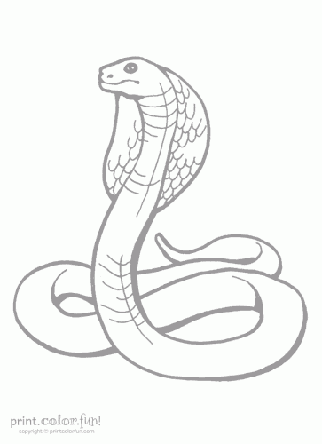 King Cobra Coloring Page Print Color Fun