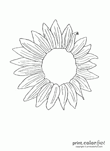 Sunflower Coloring Page Print Color Fun