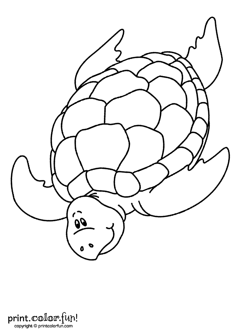 Swimming turtle coloring page - Print. Color. Fun!