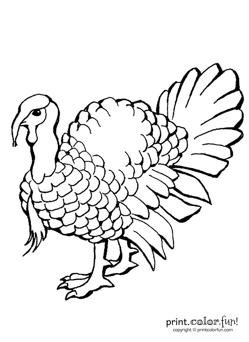 a turkey coloring page print color fun