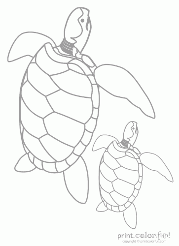 Baby Turtle Amp Dad Coloring Page Print Color Fun