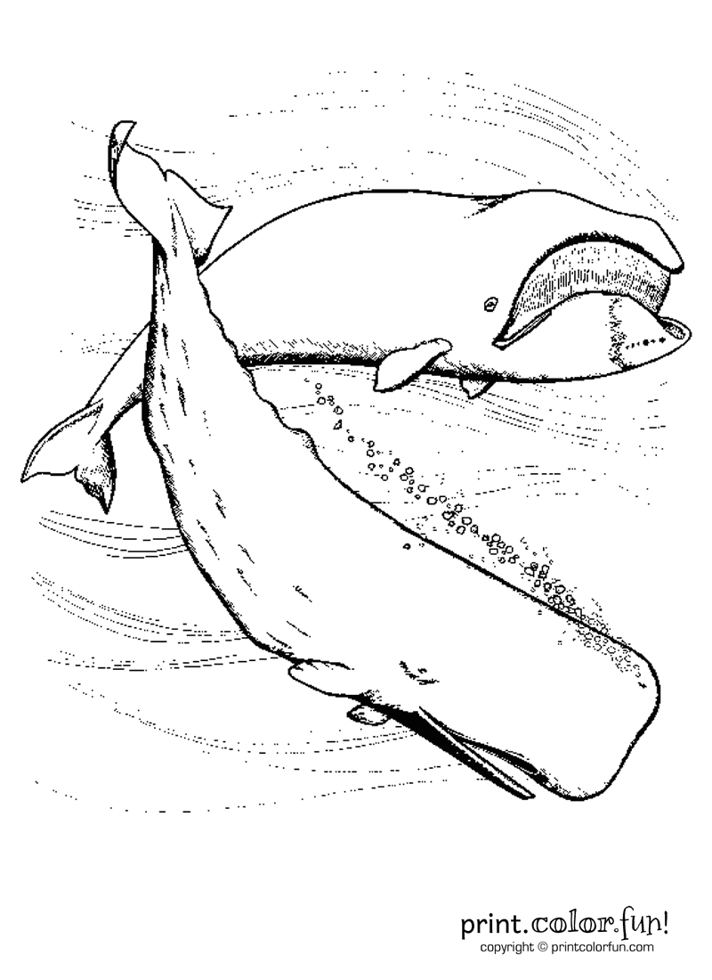 whales in the ocean coloring page print color fun
