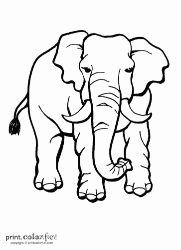 Elephant with tusks coloring page